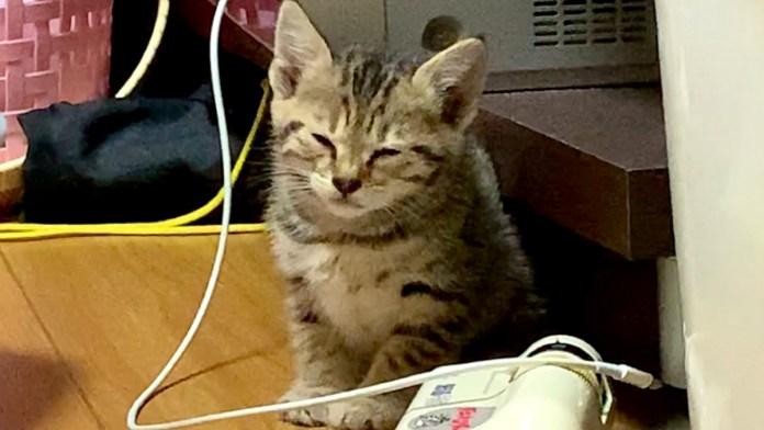 睡魔と戦う子猫