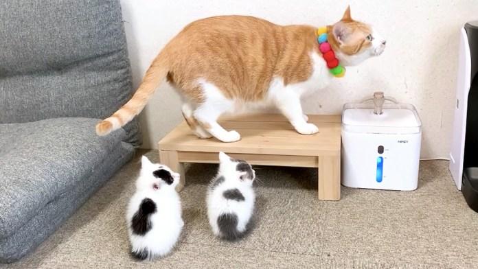 先住猫と子猫達