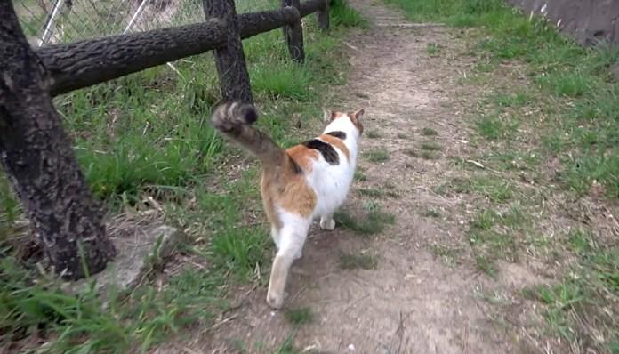 山歩きする猫