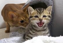 子猫と猫達