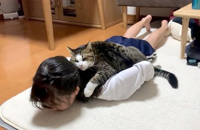 女の子に乗る猫