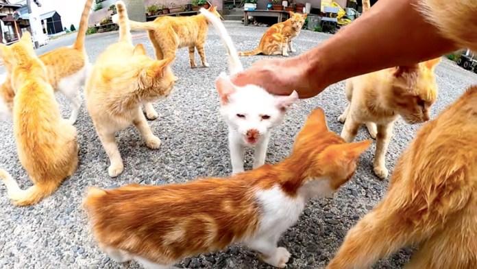 集まってきた猫