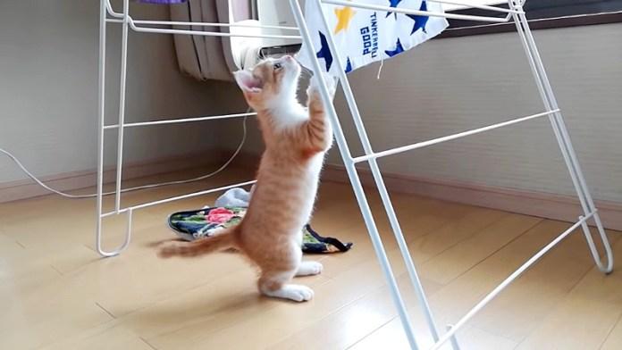 タオルで遊ぶ子猫