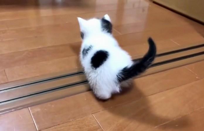 家の中を探索する子猫