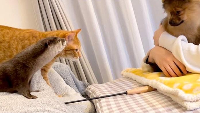 子犬に出会ったカワウソと猫