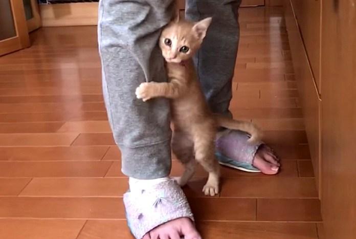 カメラに気づいた子猫