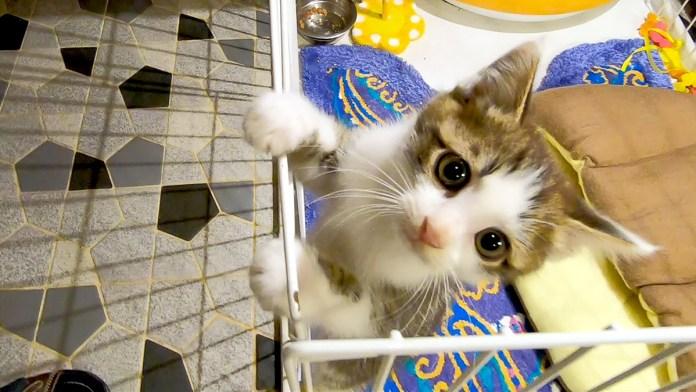 脱走する子猫
