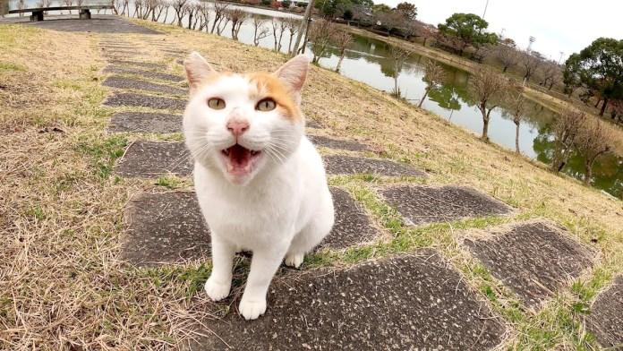 話しかけてきた猫