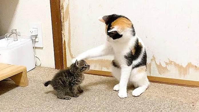 グイグイ突撃する赤ちゃん猫