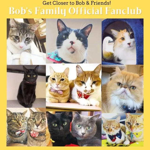 Bob's Family Official Fanclub