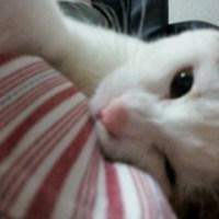 猫執事からの悲劇報告。猫が?着地失敗する??