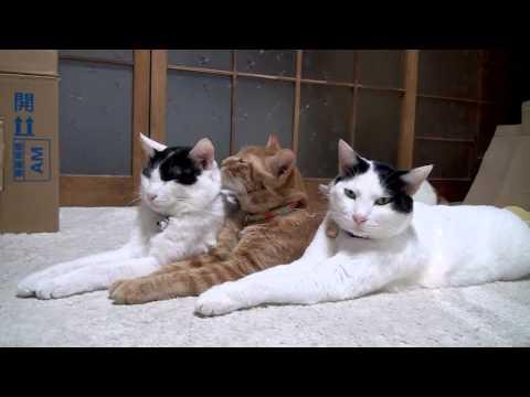 121104seiretu0 - 一糸乱れぬ整列っぷりを見せつける猫(動画)