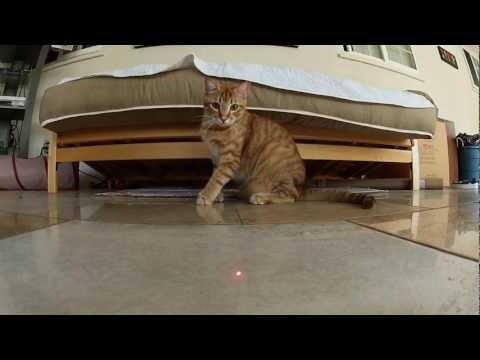 121111cat - 猫×GoPro×レーザーポインタの相性の良さは異常(動画)