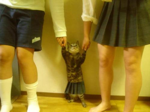 tumblr lv9rrcfavh1qzc4r1o1 500 - 女子高生っぽい猫が女子高生っぽい2人に捕まった写真