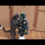 猫によるクリスマスツリー倒壊事案動画(4名の共犯)