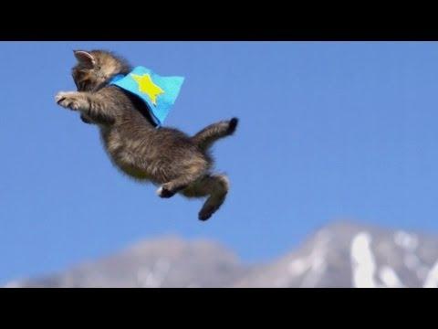 121221fly - 本編よりも100万以上多く再生されたフライング子猫動画