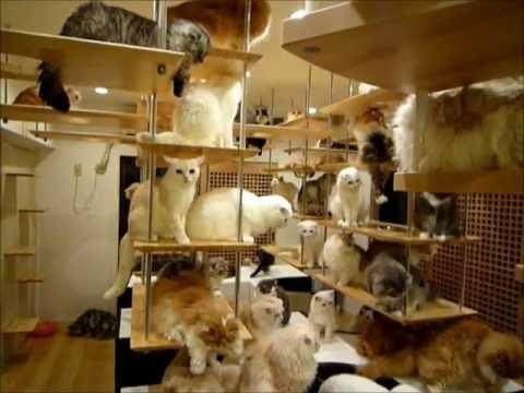 121225cathouse - 一軒丸ごと猫空間の「猫の家」がすごい