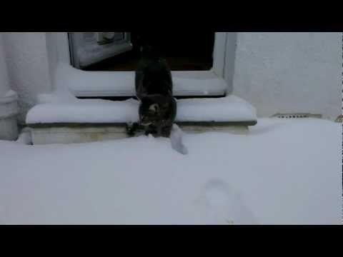 130120Fletcher - トラ猫フレッチャー、初めての雪に興奮しすぎ(動画)