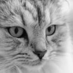 本日の美人猫vol.10