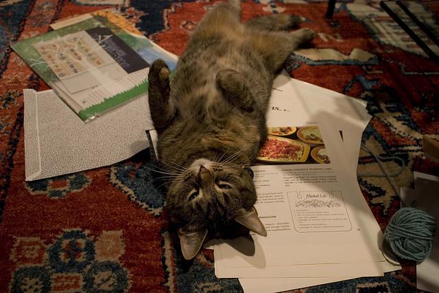 3251435166 74bd54deed z - どうして猫は新聞の上に乗っかるのか?(写真まとめ)
