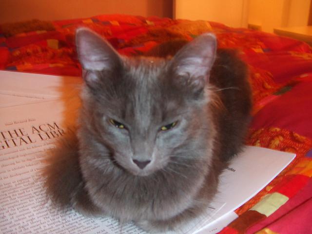 3391979989 bc8862f00b z - どうして猫は新聞の上に乗っかるのか?(写真まとめ)