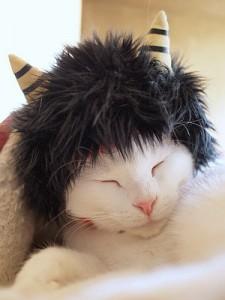 1300201oni01 225x300 - とても外には追い出せない鬼猫コスプレ写真集