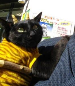 130201oni03 264x300 - とても外には追い出せない鬼猫コスプレ写真集