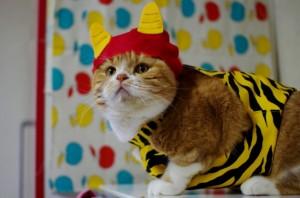 130201oni04 300x198 - とても外には追い出せない鬼猫コスプレ写真集
