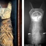 イギリスの民家の屋根裏から2000年前の猫ミイラが見つかる