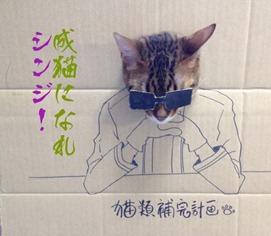 2e34bd7f3c thumb4 - 「段ボール×猫=コスプレ」の破壊力の強さが異常