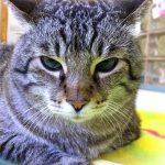 猫のモバイルユーザビリティ調査が発表される