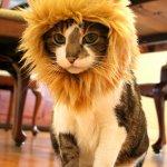 一瞬で百獣の王化する、猫用ライオン帽子