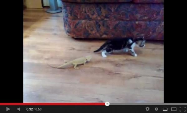 130513lizardvscat 600x365 - トカゲの不意打ち(?)に、恐れおののきすぎる子猫(動画)