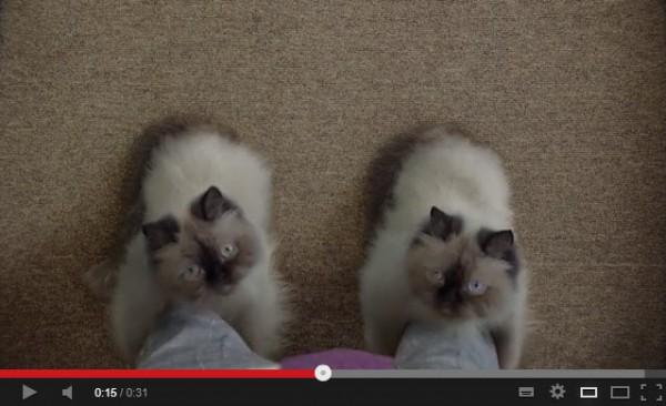130515catboots 600x366 - もし、猫がブーツになったなら(動画)