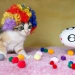 猫のカツラ「Kitty Wig」新作写真