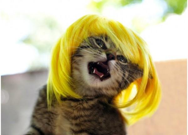 130517kityywigs02 600x431 - 猫のカツラ「Kitty Wig」新作写真
