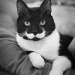 続々「王様ヒゲ」を持つ猫たち