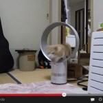 ダイソンAirMultiplier×猫で曲芸の新境地を開拓