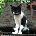「王様ヒゲ」を持つ猫vol.7