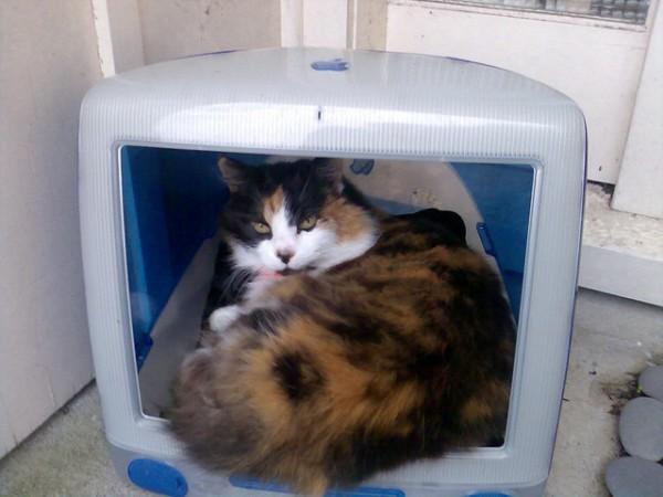 130711imaccat01 600x450 - 最初期のiMacは、猫ハウスに最適であると分かる写真まとめ