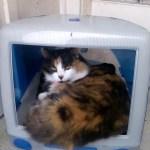 最初期のiMacは、猫ハウスに最適であると分かる写真まとめ