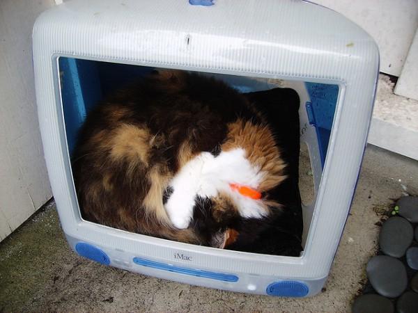 130711imaccat04 600x450 - 最初期のiMacは、猫ハウスに最適であると分かる写真まとめ