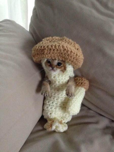 130717cat - 反則級のかわいさを誇る、「キノコ猫」が現る