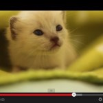 3匹の子猫を世話しながら歌う、ミュージックビデオ(動画)