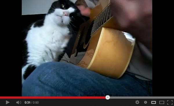130730catguitar 600x365 - 猫の前でギターを奏でるとこうなる(動画)
