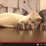 シャッフルしたカップから正解を選ぶ「Shell Game」の得意な猫たち(動画)