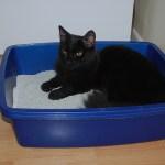 170種類以上の「猫砂」をレポートしているサイト