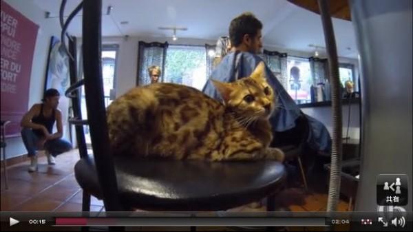 130827cat03 600x337 - カナダで「猫美容室」が大繁盛
