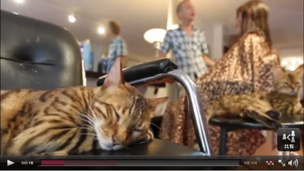 130827cat04 600x338 - カナダで「猫美容室」が大繁盛