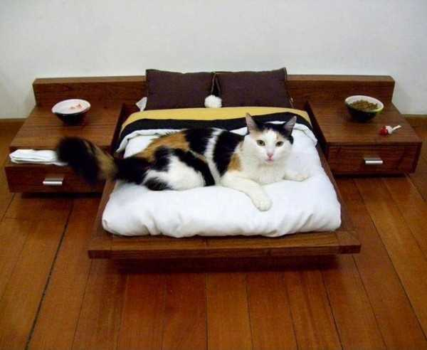 130901catbed01 - 130901catbed01